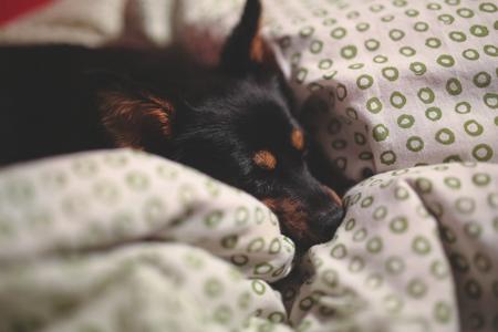 comfy dog on bed