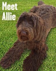 Meet Allie