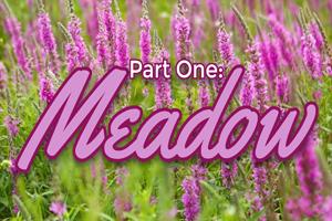 Trendwatch Meadow