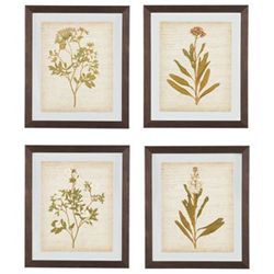 Four images of leaves in frames