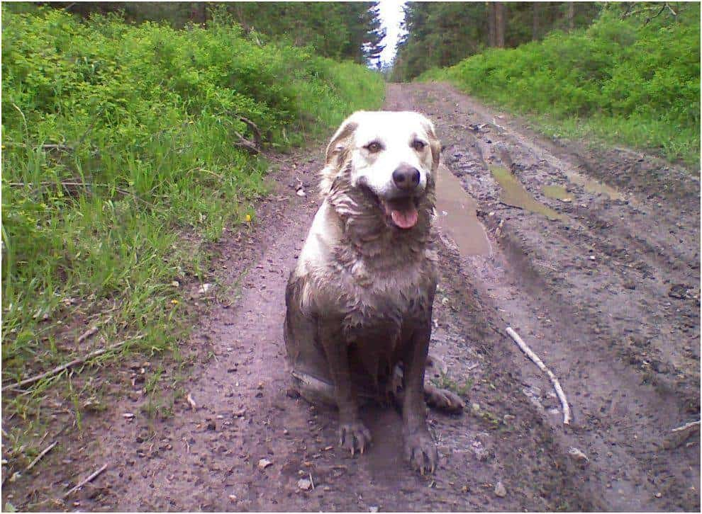 muddy dog furniture care tips