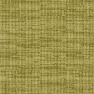 Hosta Bright Olive HOSTA-15