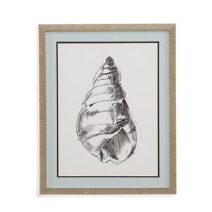 Shell Sketch V