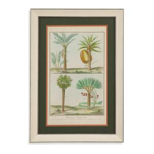 Bassett Mirror Home Accents Histoire Naturelle Tropicals I