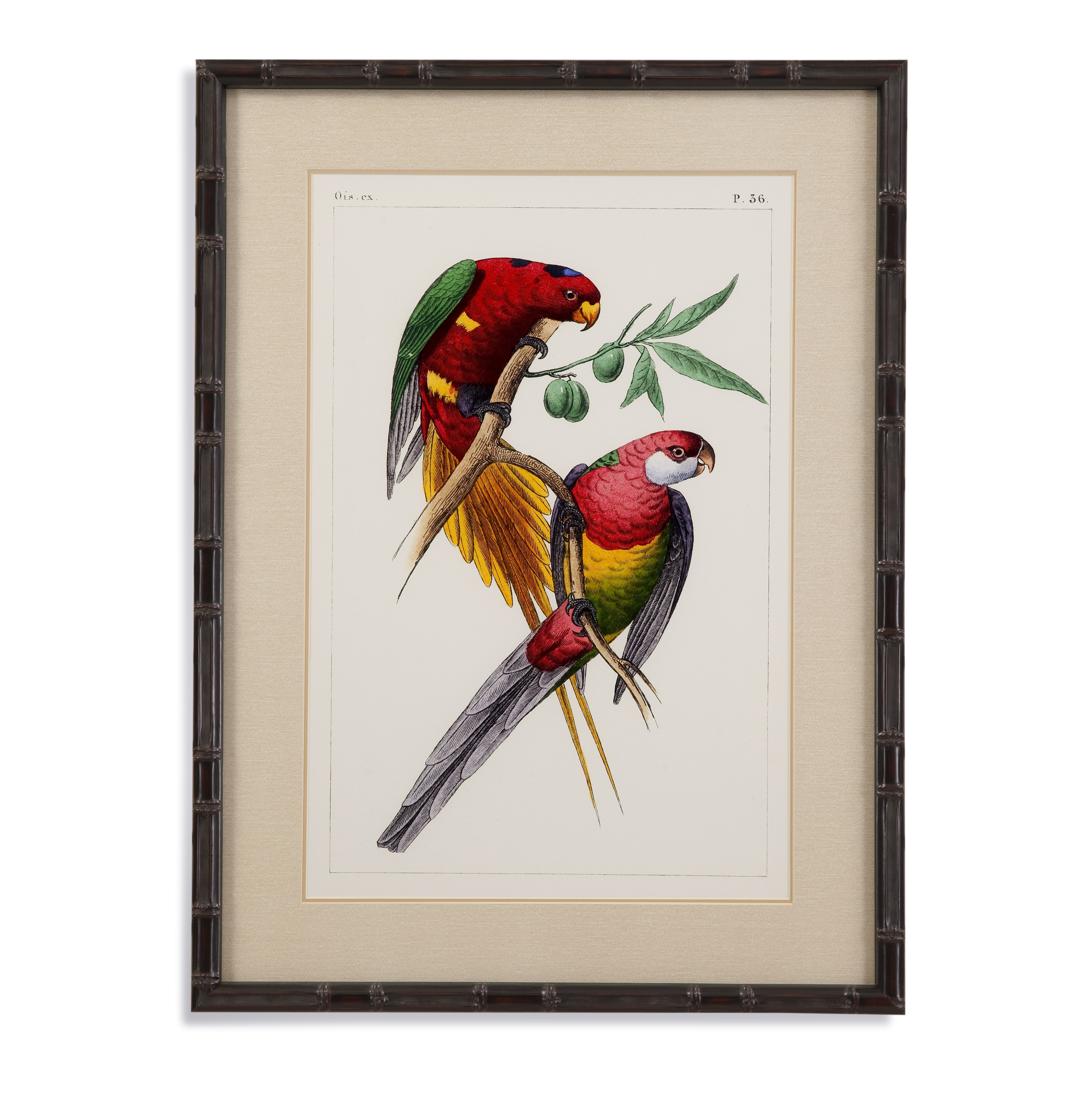 Lemaire Parrots III