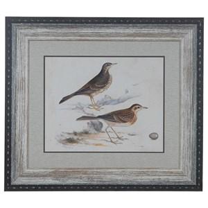 Shorebirds 6