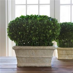 """Preserved Boxwood Potted Hedge 14"""""""