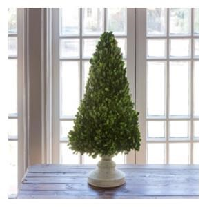 """Preserved Boxwood on Cone Stand 26"""""""