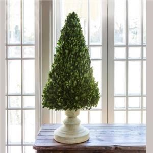 """Preserved Boxwood on Cone Stand 34"""""""