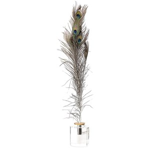 Uttermost Accessories Peacock Eye Feathers