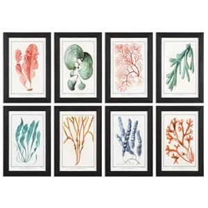 Uttermost Art Colorful Algae Framed Art, S/8