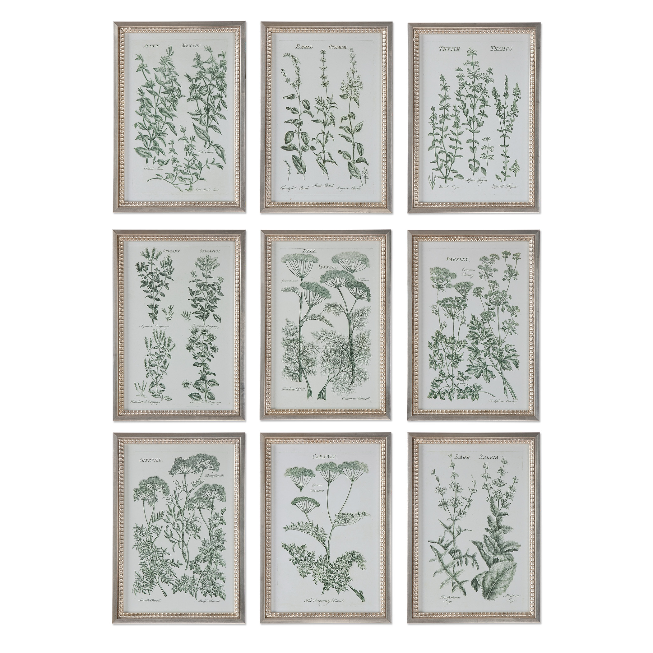 Uttermost Art Herb Garden Prints, S/9 - Item Number: 33625