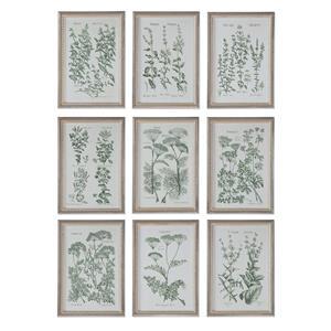 Uttermost Art Herb Garden Prints, S/9