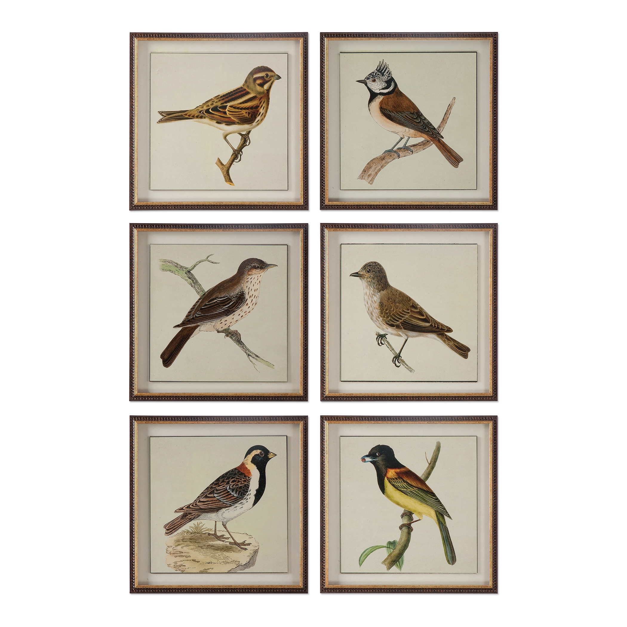 Uttermost Art Spring Soldiers Bird Prints, S/6 - Item Number: 33627