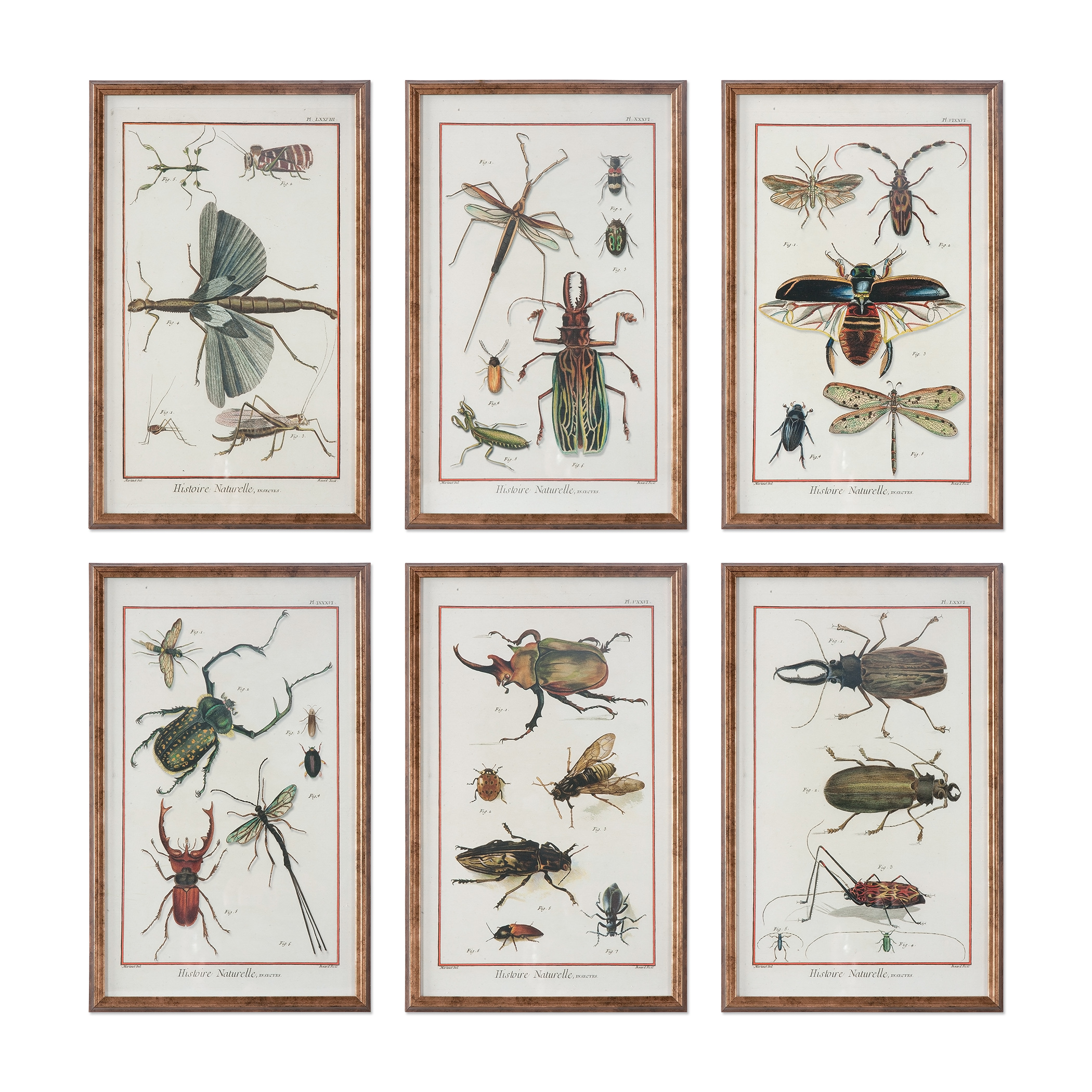 Uttermost Art Multi Insect Prints, S/6 - Item Number: 33628