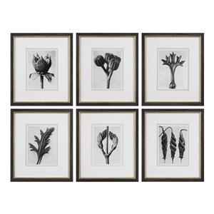 Uttermost Art Botany Specimen Prints, S/6