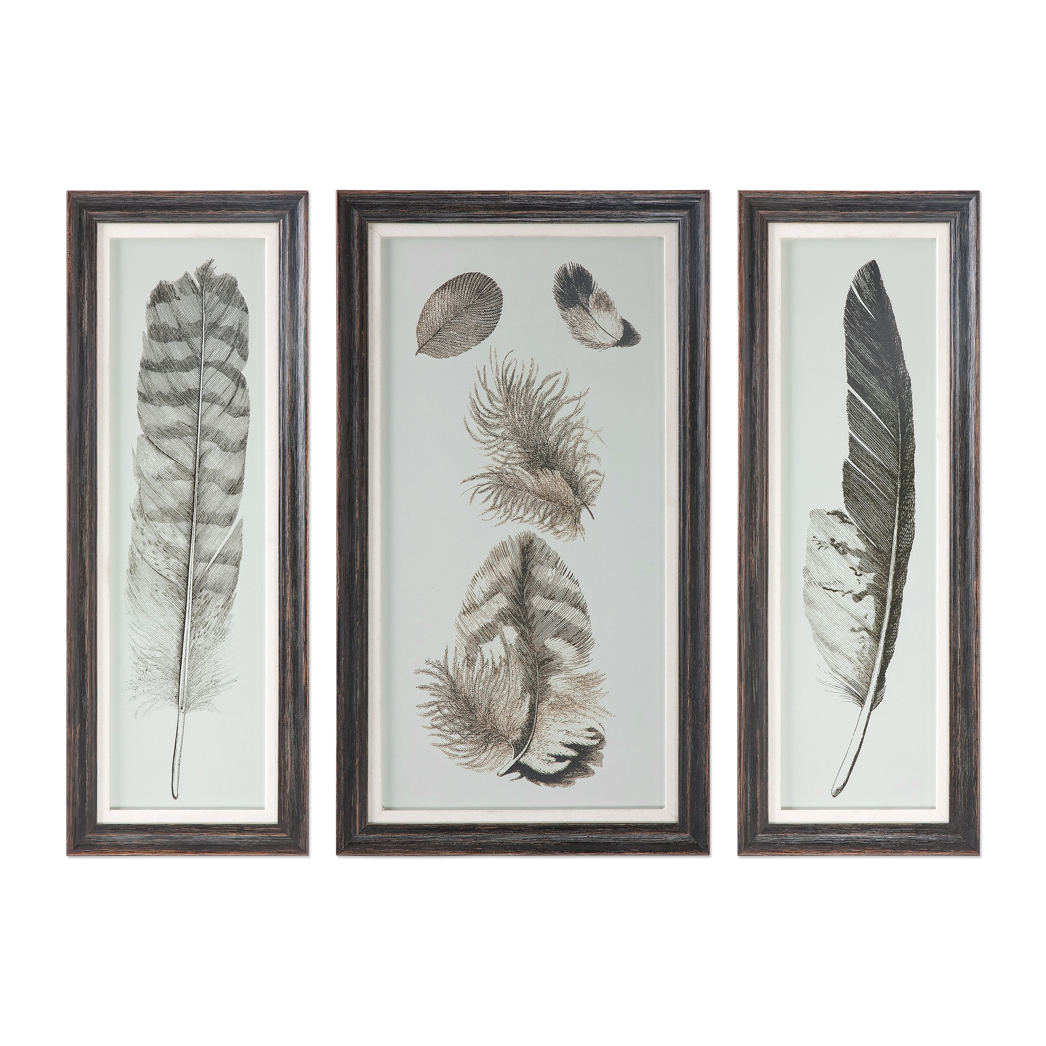 Uttermost Art Feather Study Prints, S/3 - Item Number: 33632