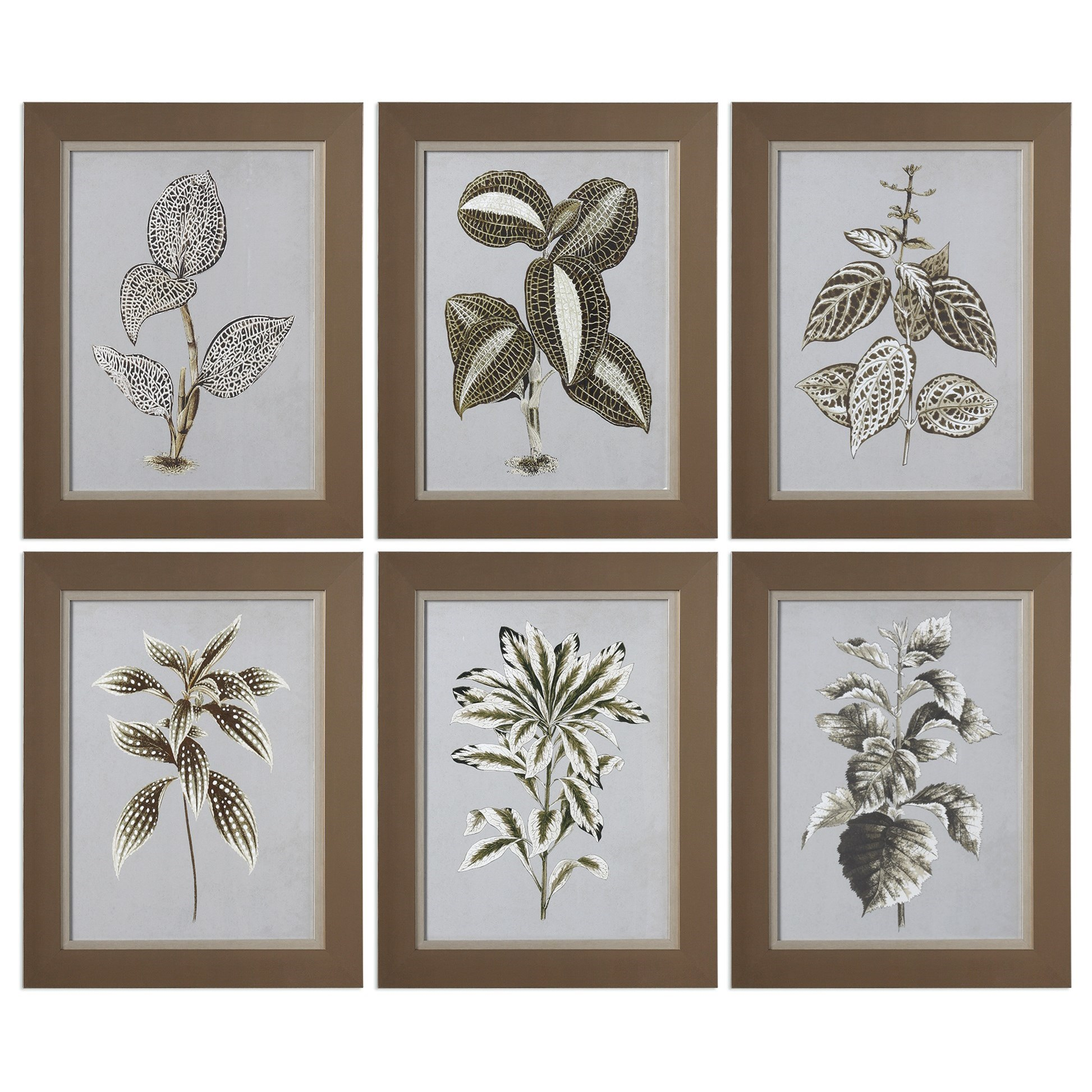 Uttermost Art Variegated Plants (Set of 6) - Item Number: 33642