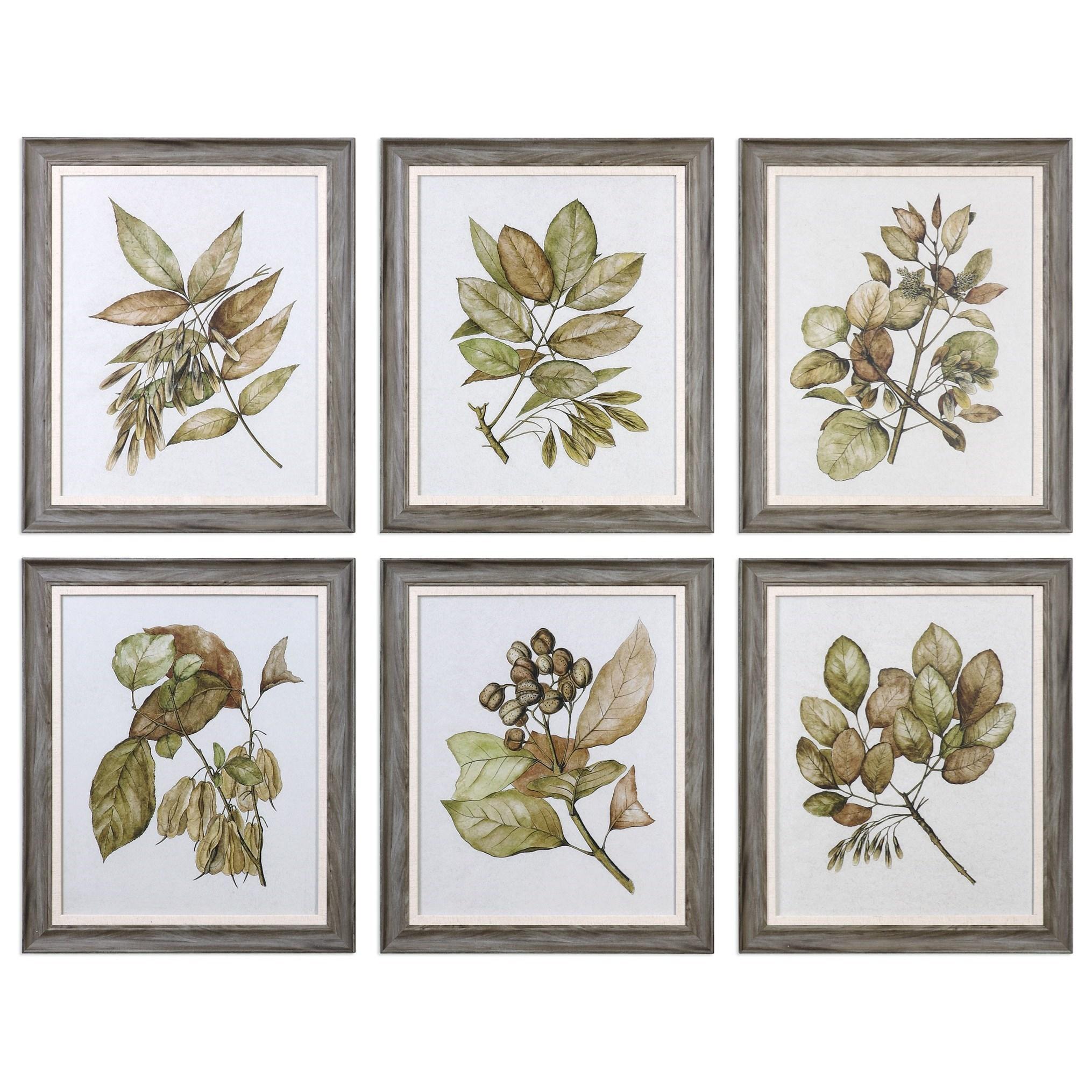 Uttermost Art Seedlings(Set of 6) - Item Number: 33643