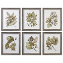Uttermost Art Seedlings(Set of 6) - Item Number: 33643