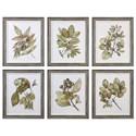 Uttermost Framed Prints Seedlings Framed Prints (Set of 6) - Item Number: 33643