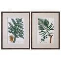 Uttermost Art Vintage Tropicals (Set of 2) - Item Number: 33650