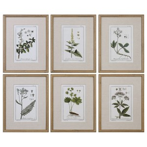 Uttermost Art Green Floral Botanical Study (Set of 6)