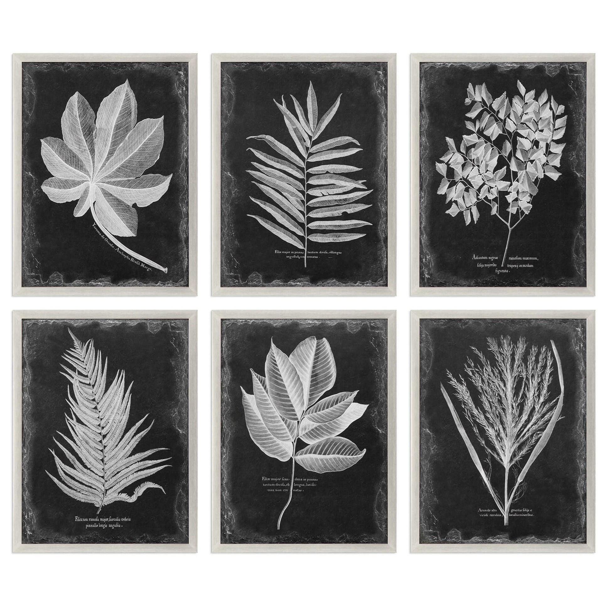 Foliage Framed Prints, Set of 6