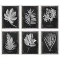Uttermost Framed Prints Foliage Framed Prints, Set of 6 - Item Number: 33671