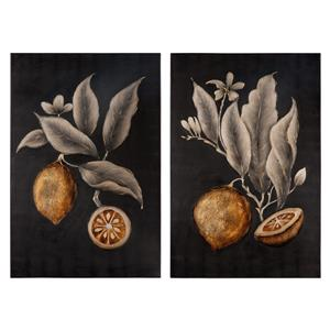 Uttermost Art Citrus Study Hand Painted Art, S/2