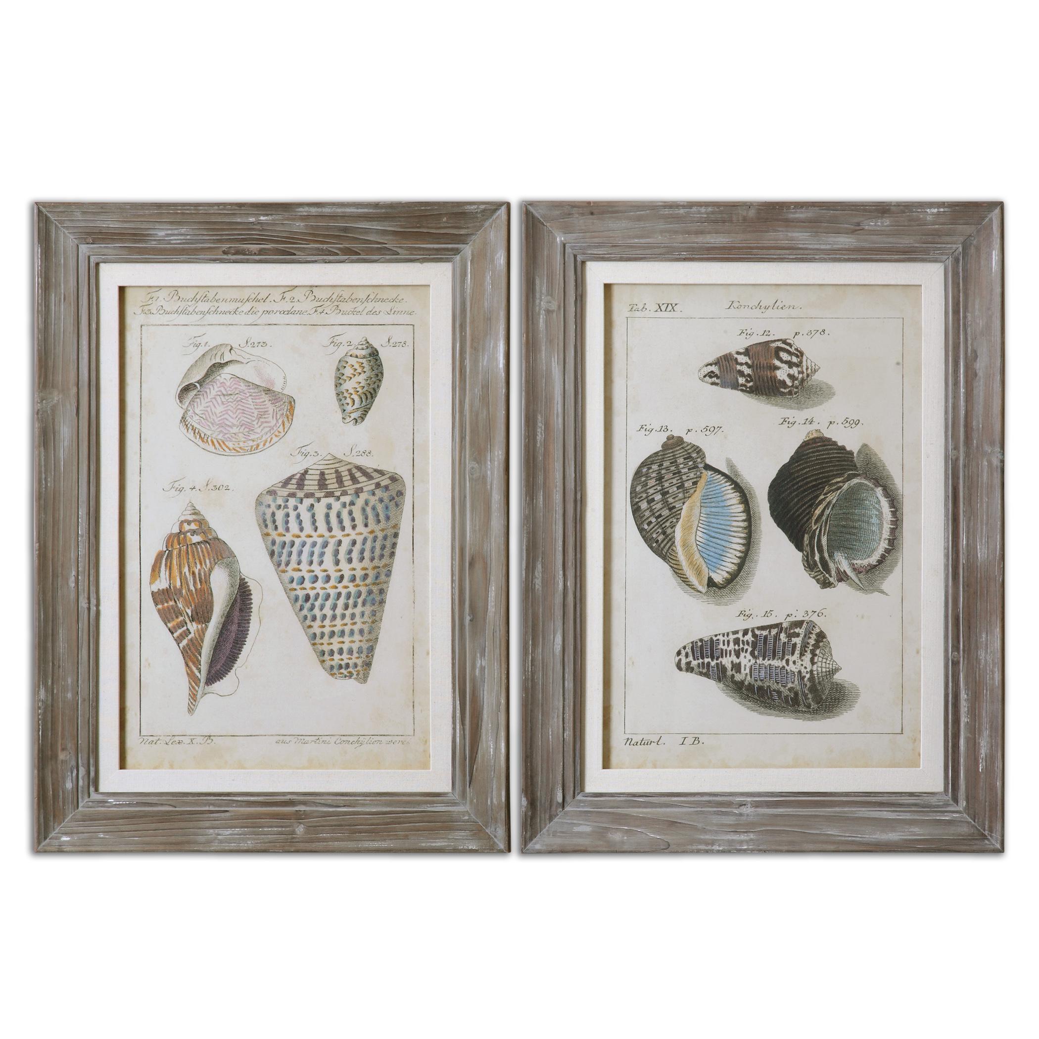 Uttermost Art Vintage Shell Study Framed Art, Set of 2 - Item Number: 41532