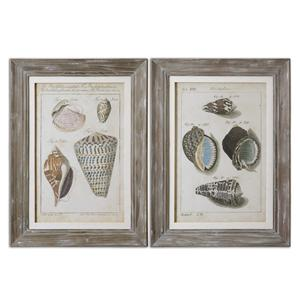 Uttermost Art Vintage Shell Study Framed Art, Set of 2