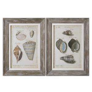 Uttermost Art Vintage Shell Study Framed Art, Set of 2