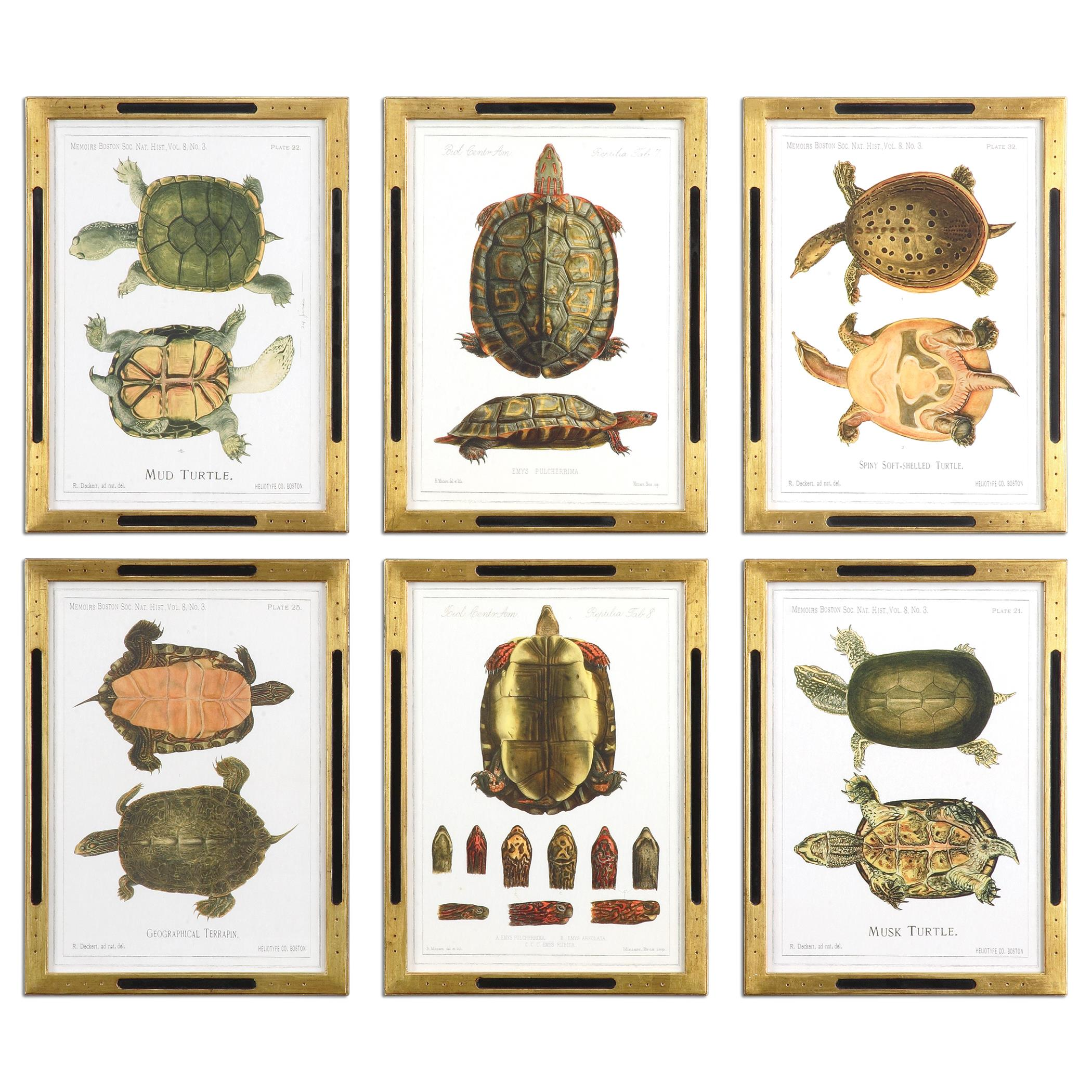 Uttermost Art Tortoise Study Framed Art, S/6 - Item Number: 41545