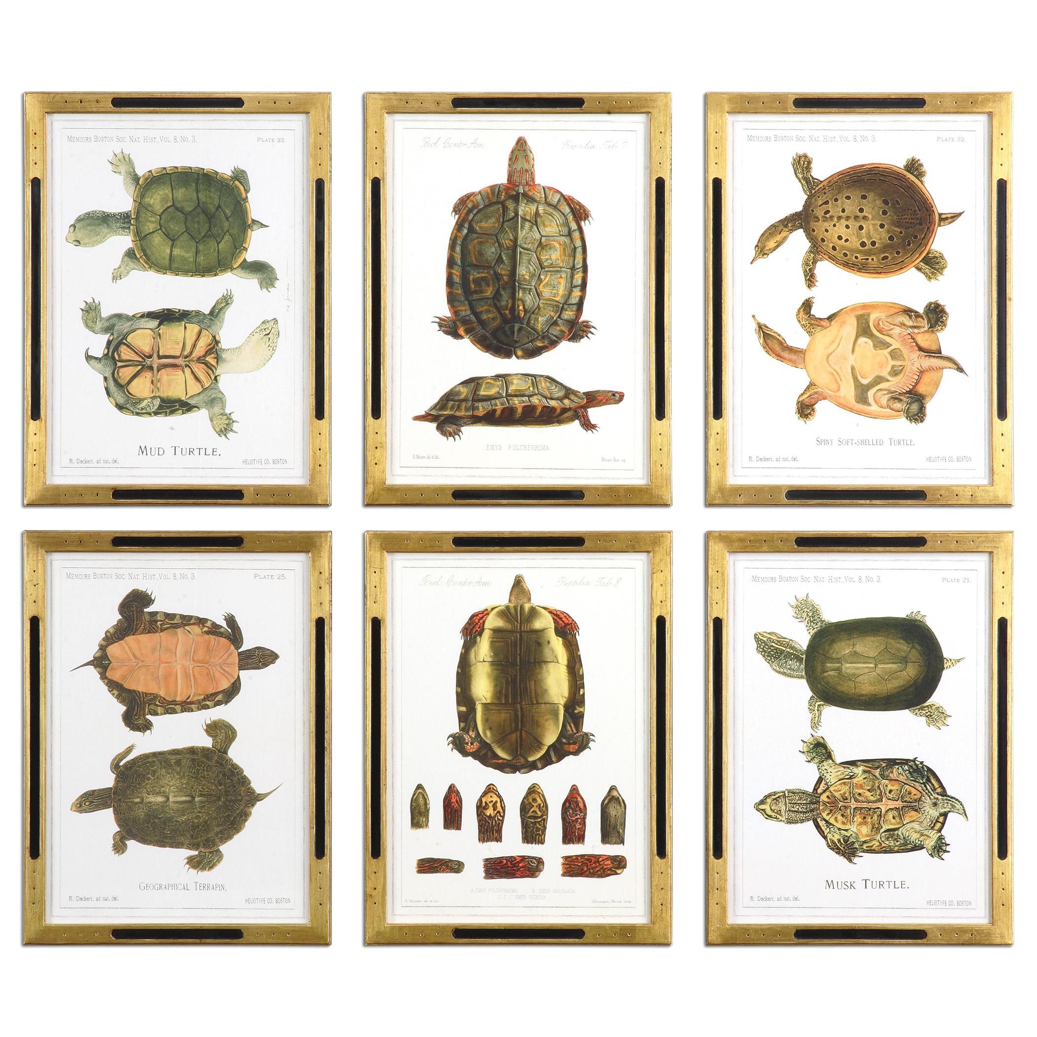 Uttermost Art Tortoise Study Framed Art, S/6 - Item Number: 41545