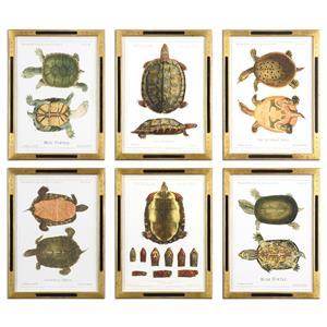 Uttermost Art Tortoise Study Framed Art, S/6
