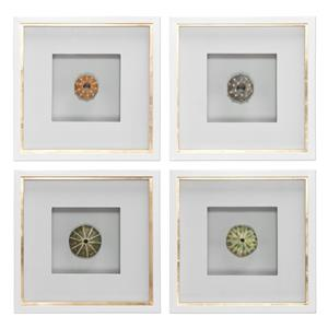 Uttermost Art Sea Urchins Shadow Box Art, S/4
