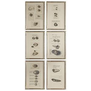 Study Of Shells Prints