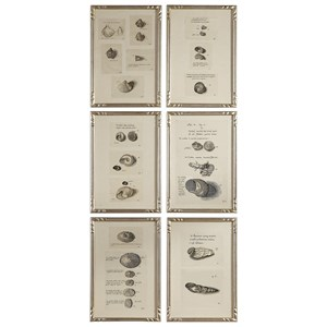 Uttermost Art Study Of Shells Prints