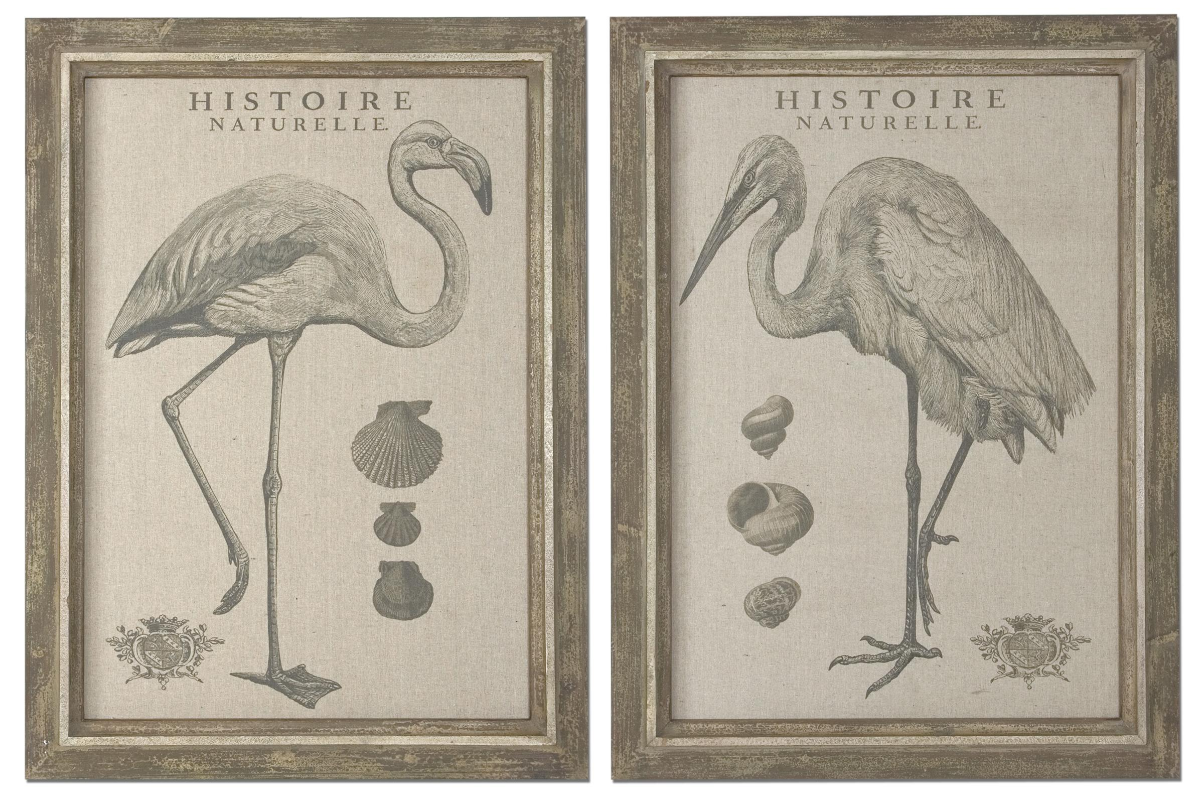 Uttermost Art Natural History - Item Number: 51077