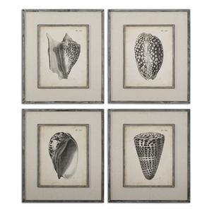 Uttermost Art Vintage Diderot Shells Art Set of 4
