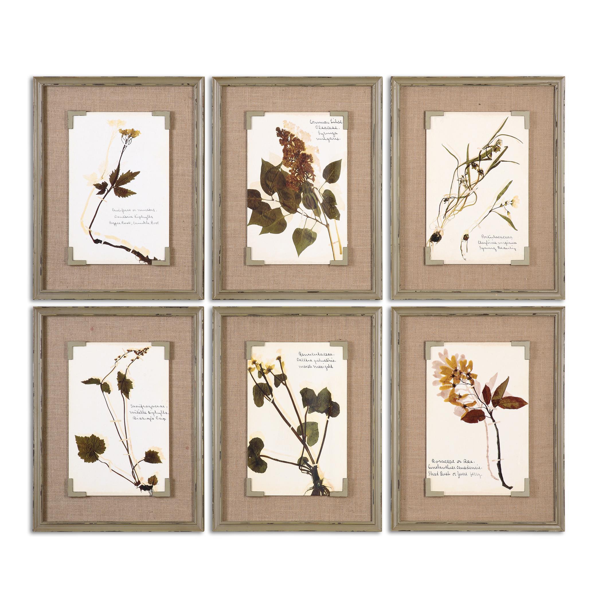 Uttermost Art Ceramic Florals Framed Art, S/6 - Item Number: 55024