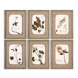 Uttermost Art Ceramic Florals Framed Art, S/6
