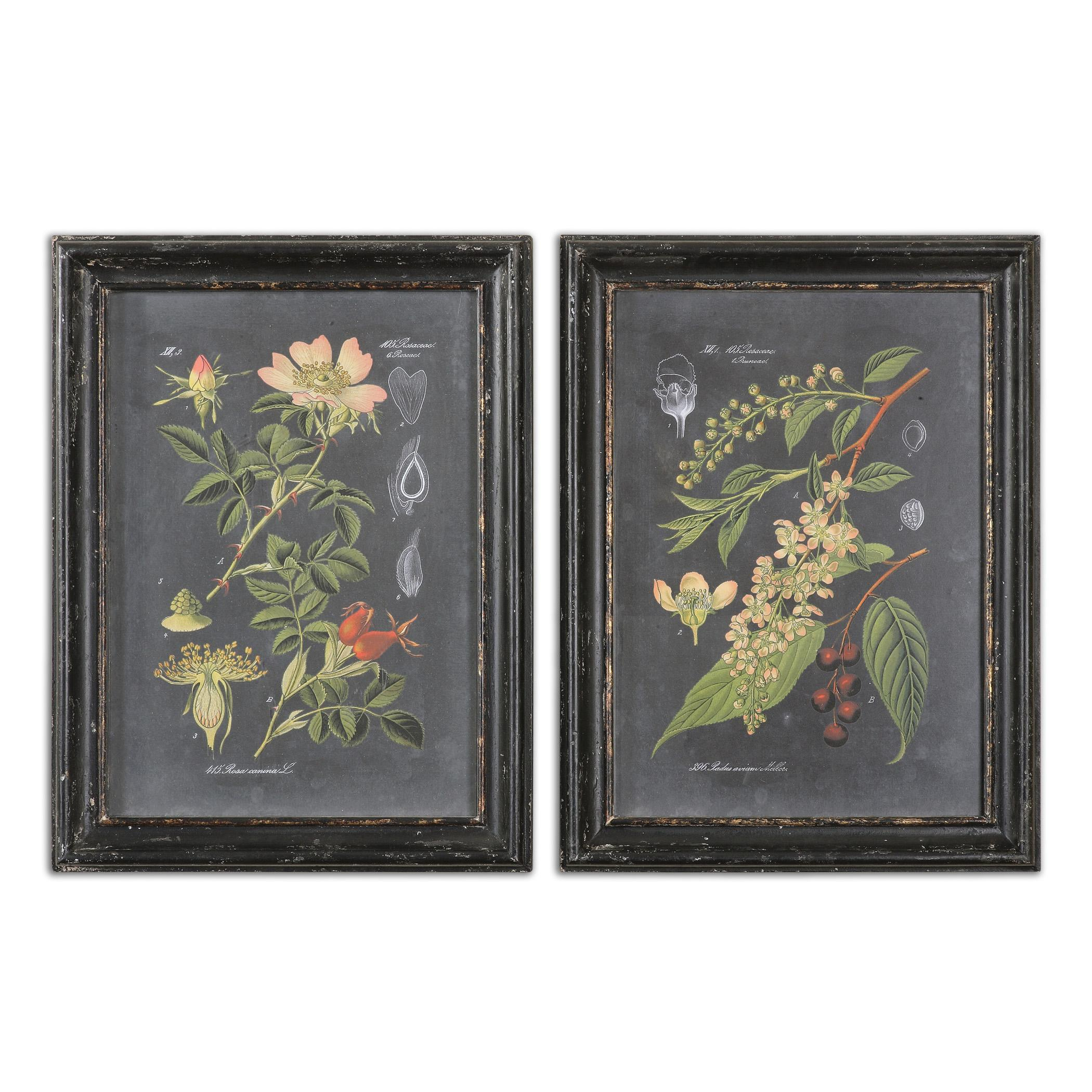 Uttermost Art Midnight Botanicals Wall Art Set of 2 - Item Number: 56053