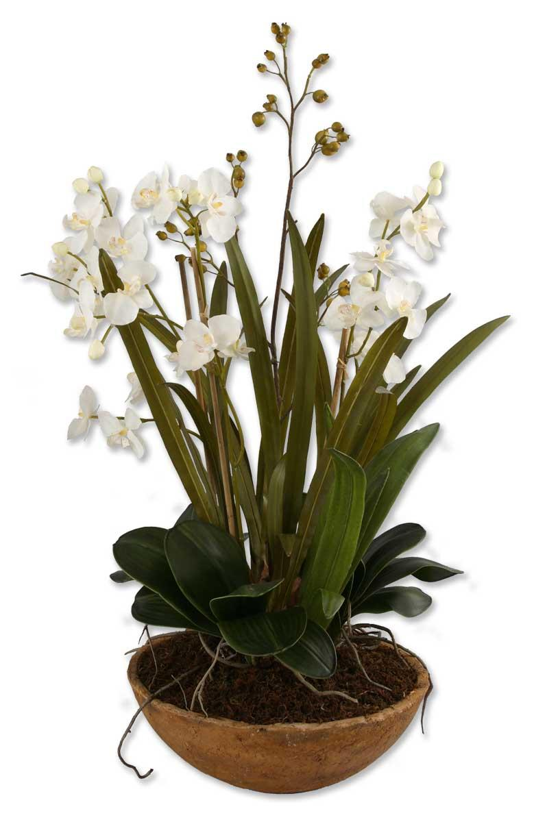 Uttermost Botanicals Moth Orchid Planter - Item Number: 60039