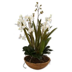 Uttermost Botanicals Moth Orchid Planter