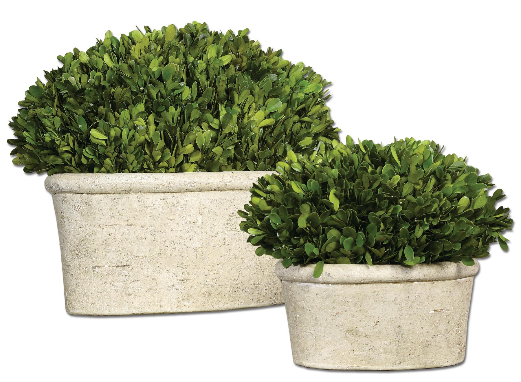Uttermost Botanicals Preserved Boxwood Oval Domes Set of 2 - Item Number: 60107