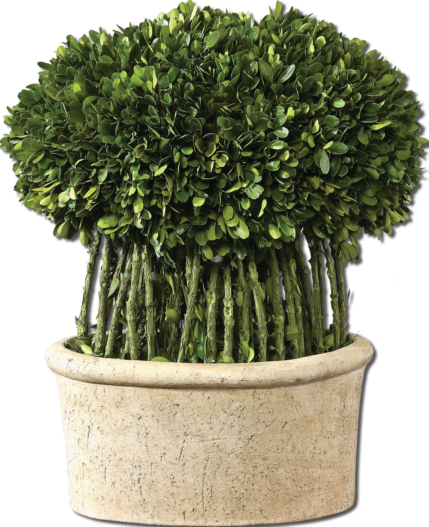 Uttermost Botanicals Preserved Boxwood Willow Topiary - Item Number: 60108