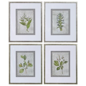 Stem Study Framed Prints Set/4