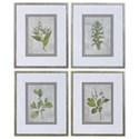 Uttermost Framed Prints Stem Study Framed Prints Set/4 - Item Number: 33690